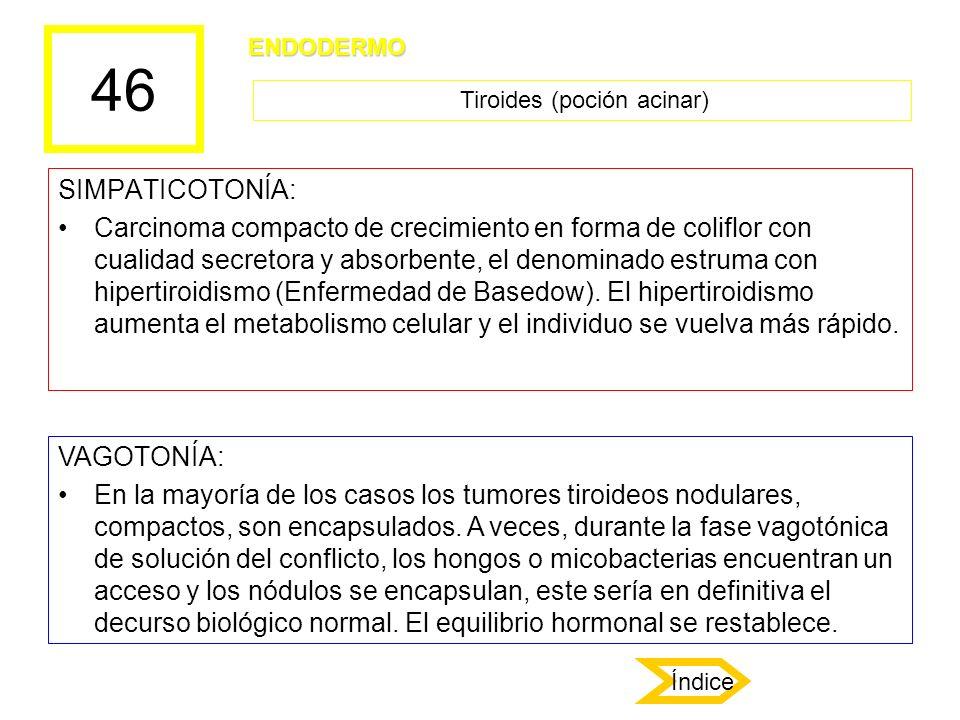 Tiroides (poción acinar)