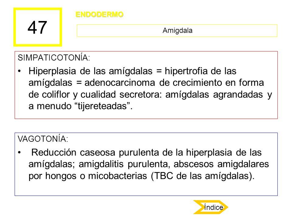 47 ENDODERMO. Amigdala. SIMPATICOTONÍA: