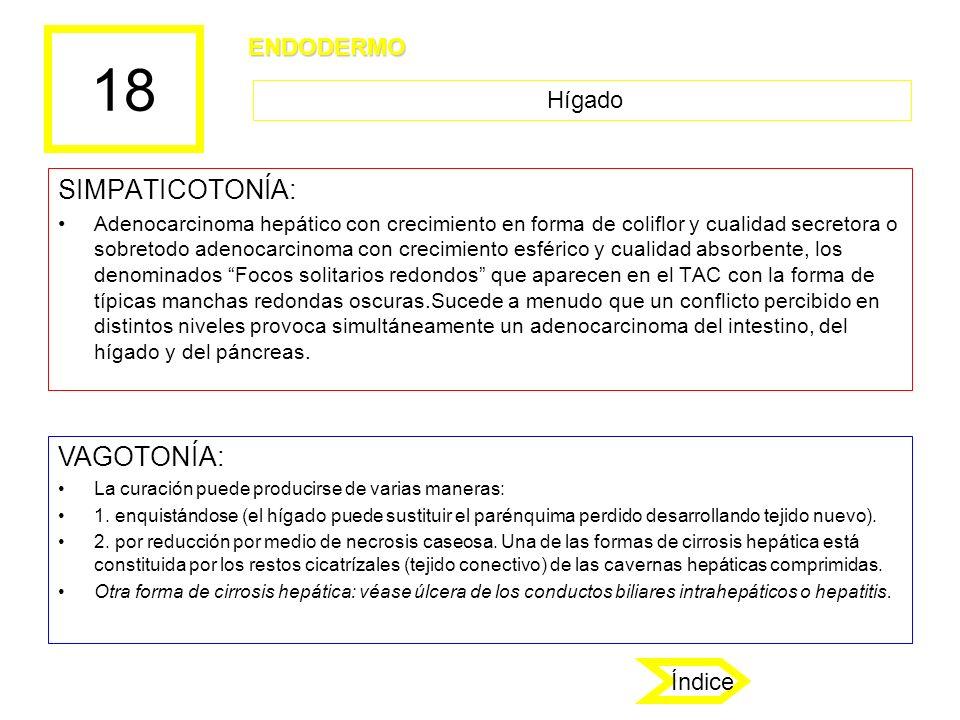 18 SIMPATICOTONÍA: VAGOTONÍA: ENDODERMO Hígado Índice
