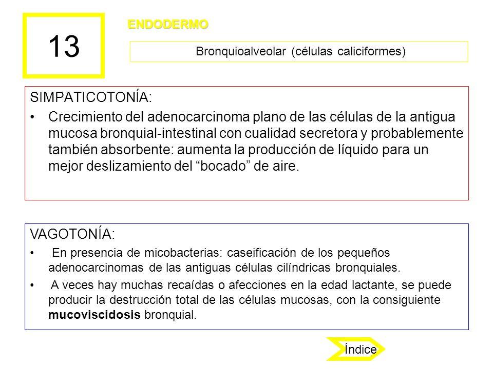 Bronquioalveolar (células caliciformes)
