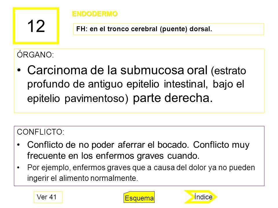 12 ENDODERMO. FH: en el tronco cerebral (puente) dorsal. ÓRGANO: