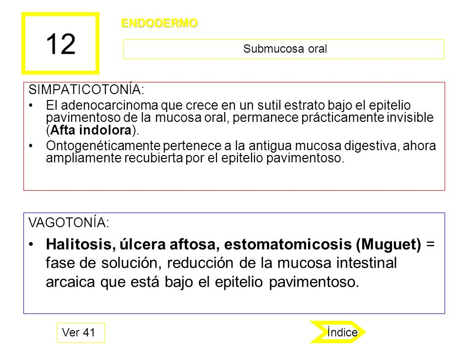 12 ENDODERMO. Submucosa oral. SIMPATICOTONÍA: