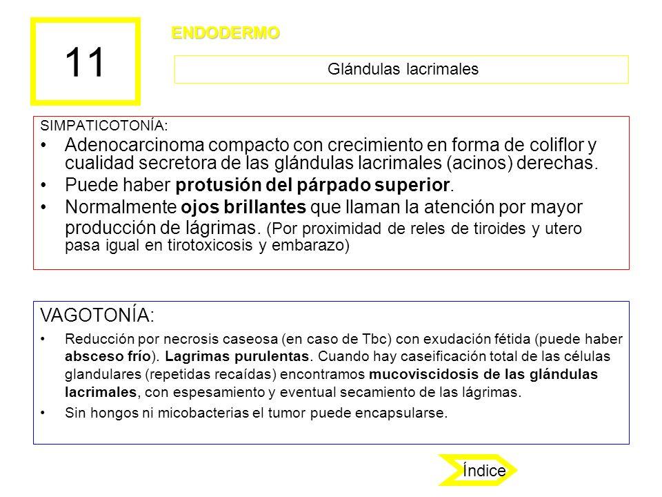 11 ENDODERMO. Glándulas lacrimales. SIMPATICOTONÍA: