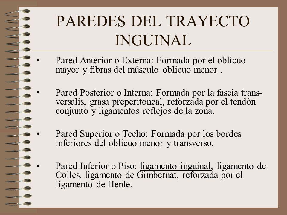 PAREDES DEL TRAYECTO INGUINAL