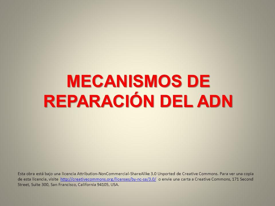 MECANISMOS DE REPARACIÓN DEL ADN