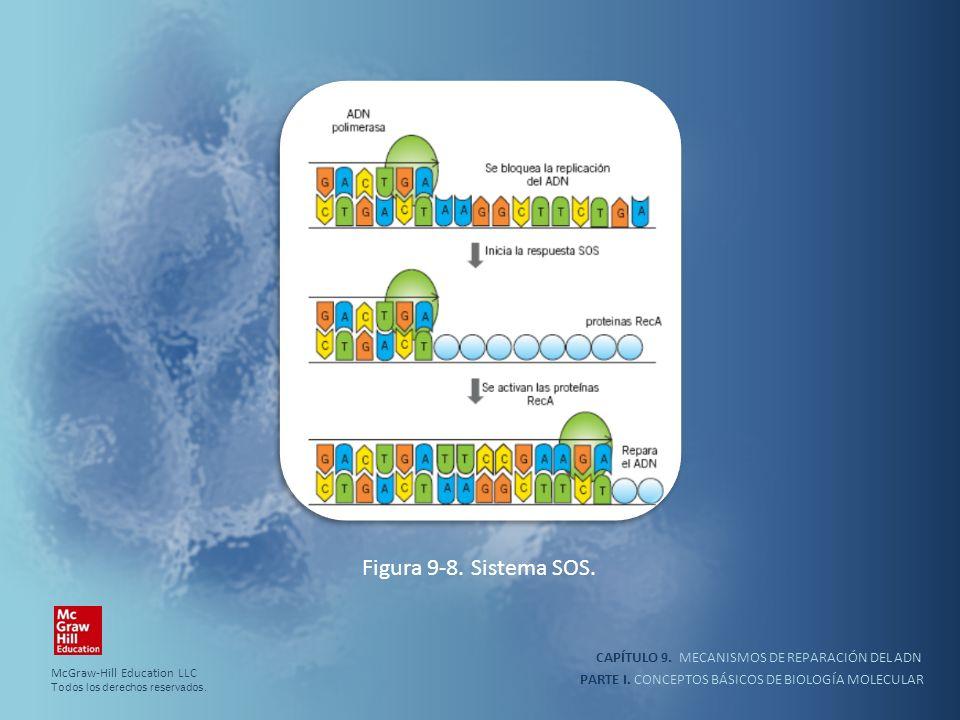 Figura 9-8. Sistema SOS. CAPÍTULO 9. MECANISMOS DE REPARACIÓN DEL ADN