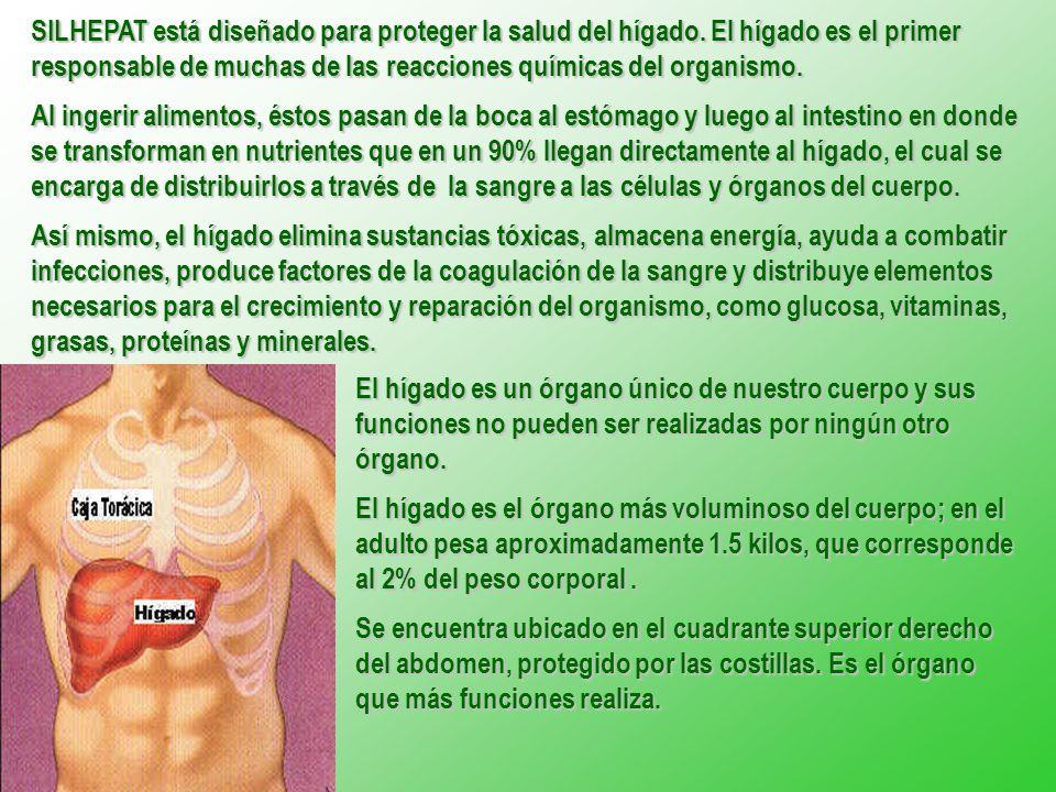 SILHEPAT está diseñado para proteger la salud del hígado