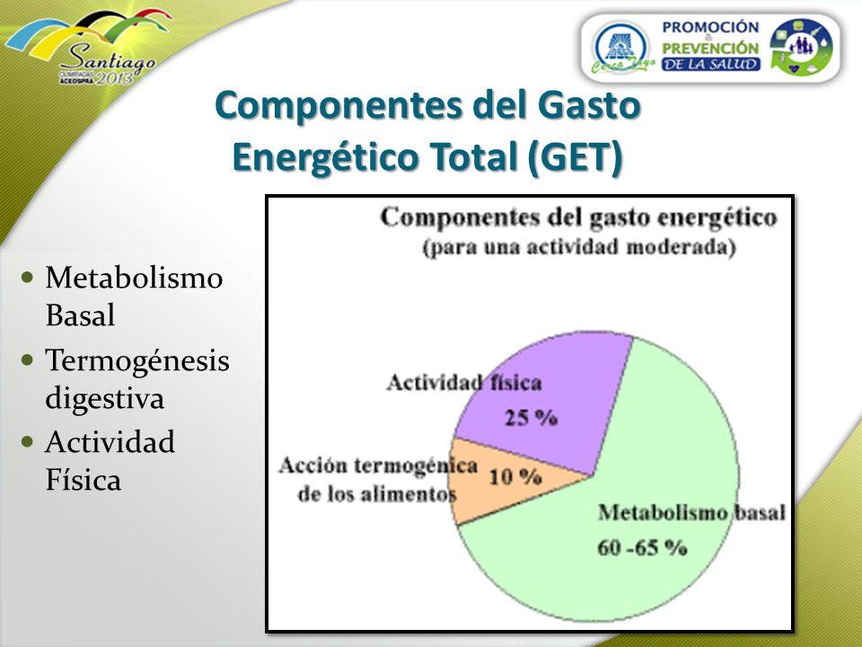 Componentes del Gasto Energético Total (GET)