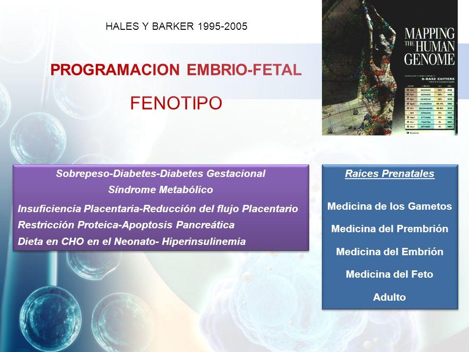 FENOTIPO PROGRAMACION EMBRIO-FETAL HALES Y BARKER 1995-2005