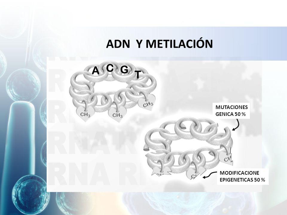 ADN Y METILACIÓN MUTACIONES GENICA 50 % MODIFICACIONE