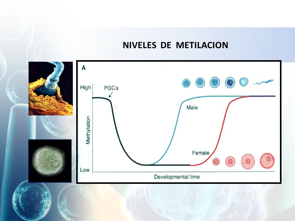 NIVELES DE METILACION