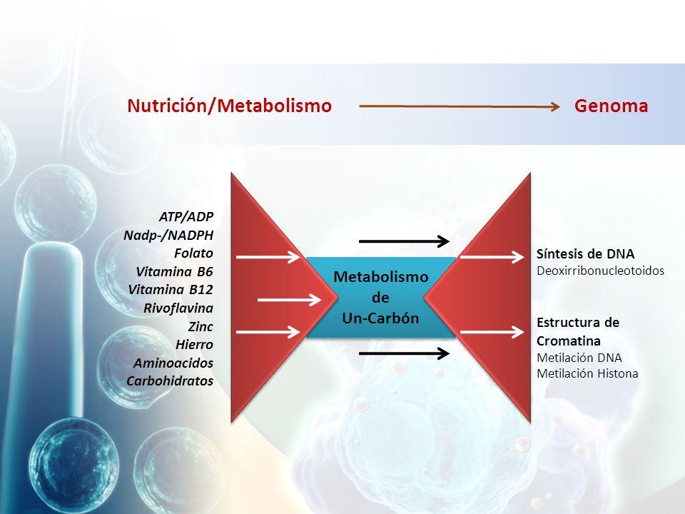Nutrición/Metabolismo Genoma