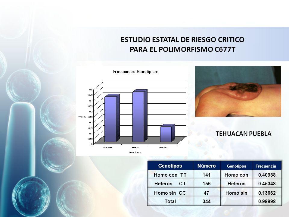 ESTUDIO ESTATAL DE RIESGO CRITICO PARA EL POLIMORFISMO C677T