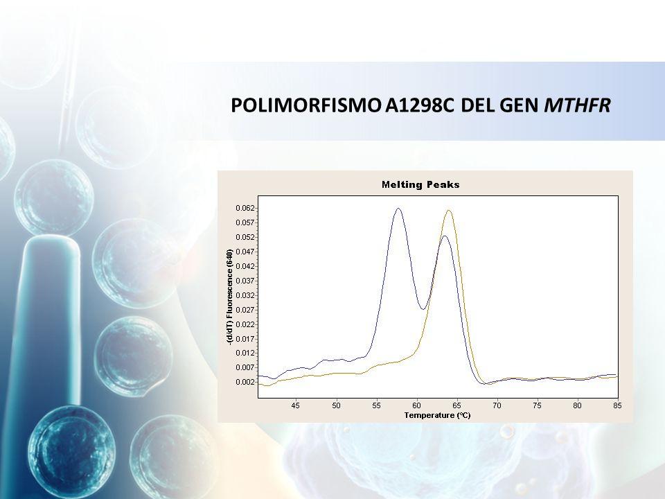 POLIMORFISMO A1298C DEL GEN MTHFR