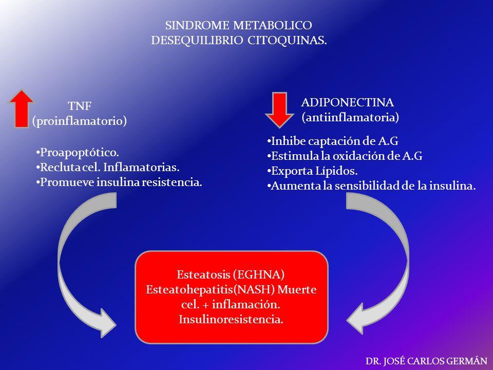 SINDROME METABOLICO DESEQUILIBRIO CITOQUINAS.