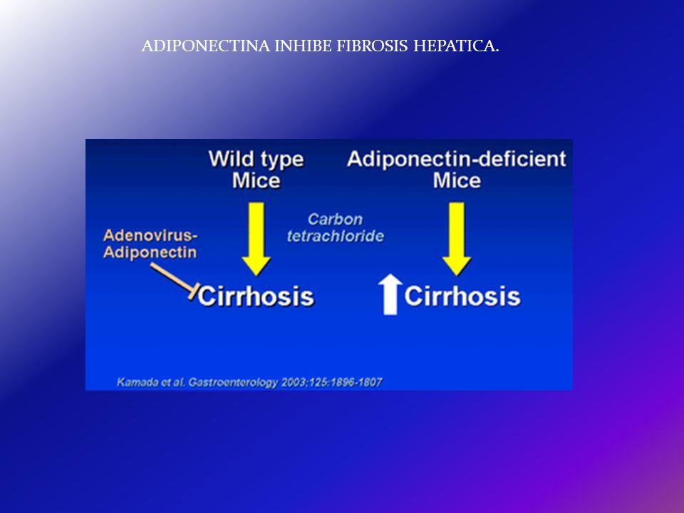 ADIPONECTINA INHIBE FIBROSIS HEPATICA.