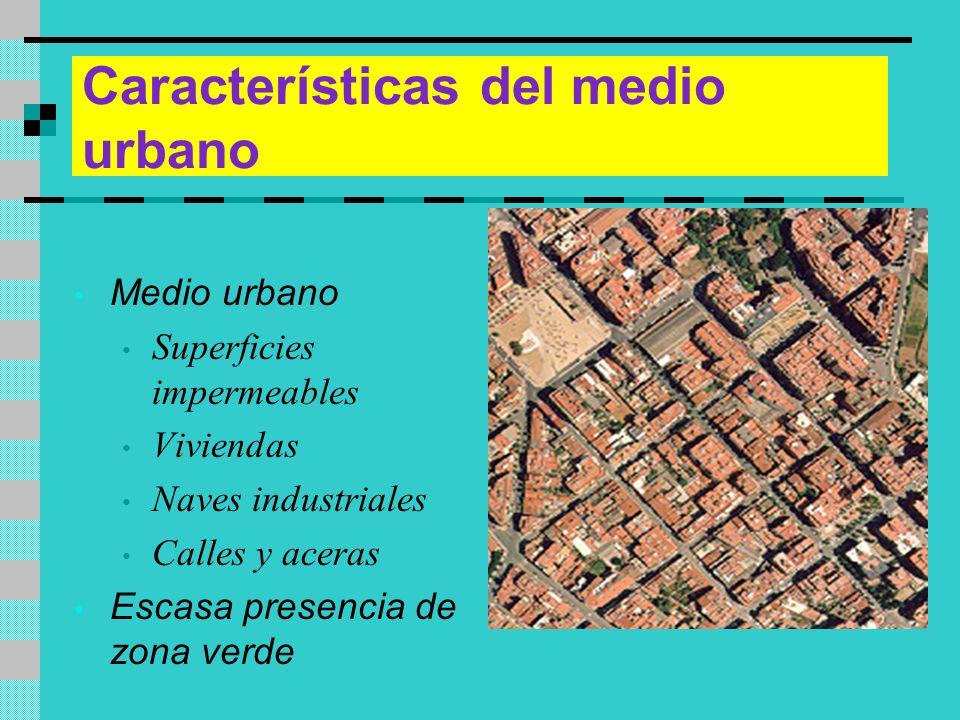 Características del medio urbano