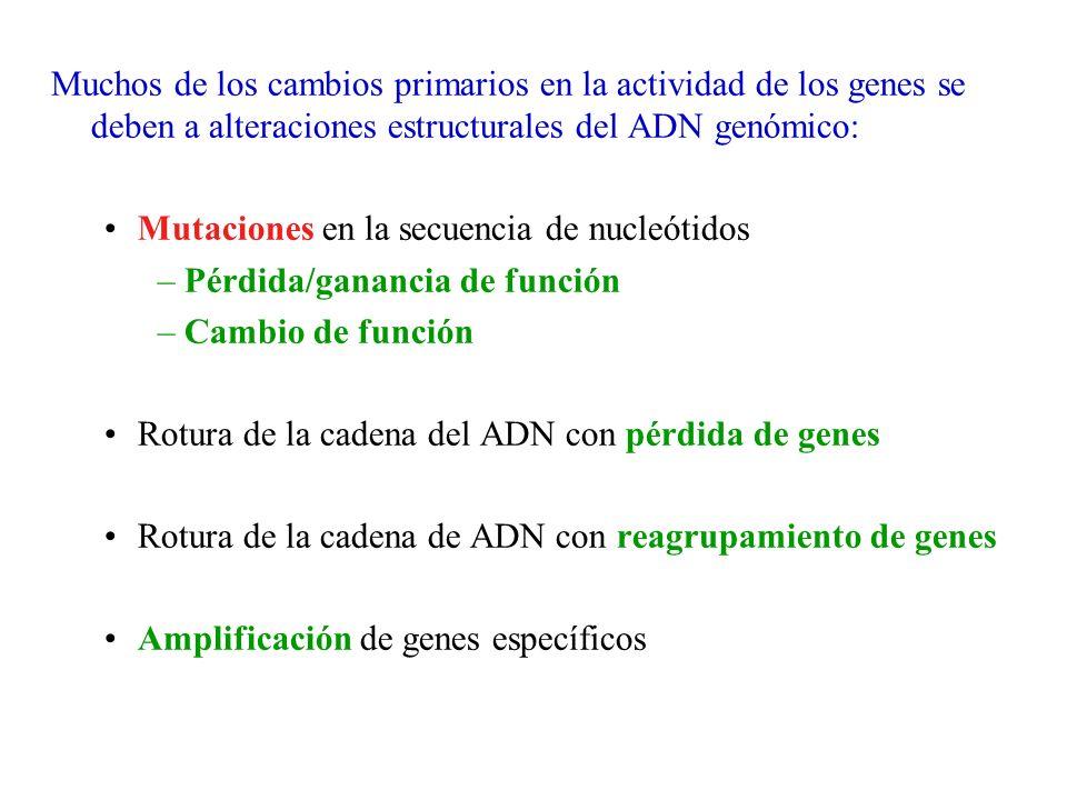 Muchos de los cambios primarios en la actividad de los genes se deben a alteraciones estructurales del ADN genómico: