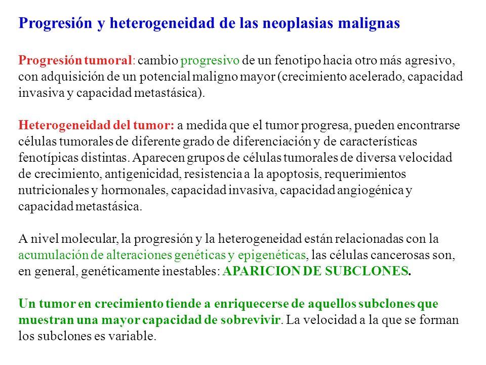 Progresión y heterogeneidad de las neoplasias malignas