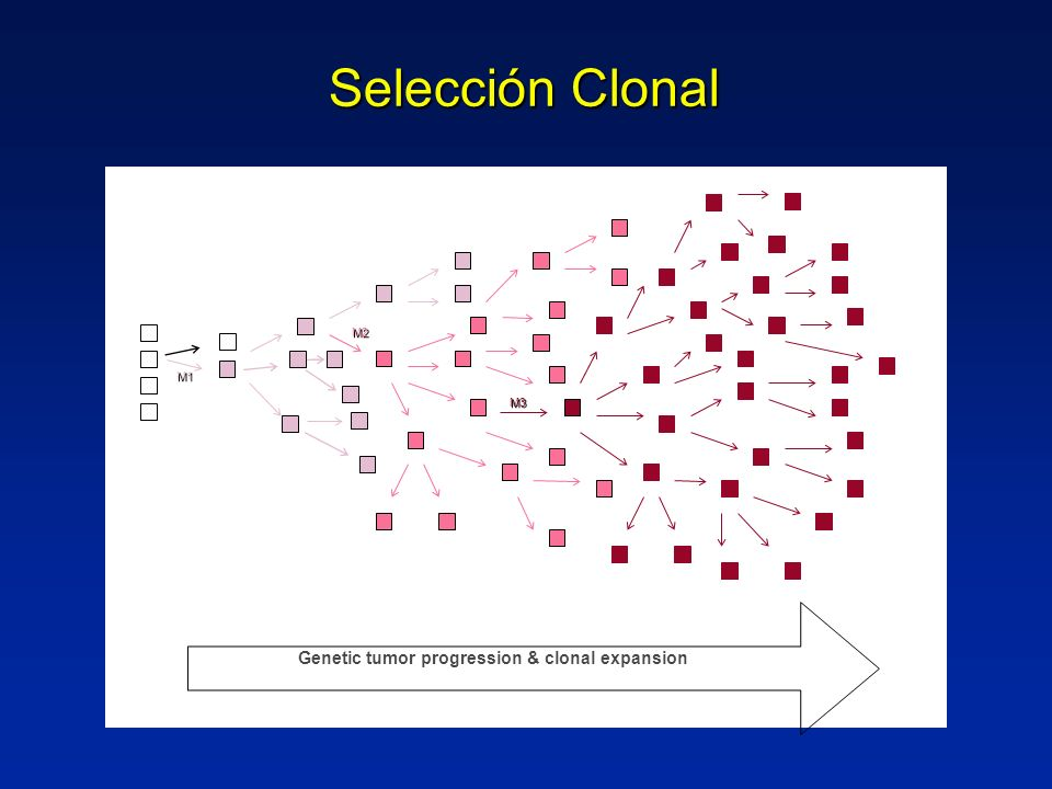 Selección Clonal M2 M1 M3 Genetic tumor progression & clonal expansion