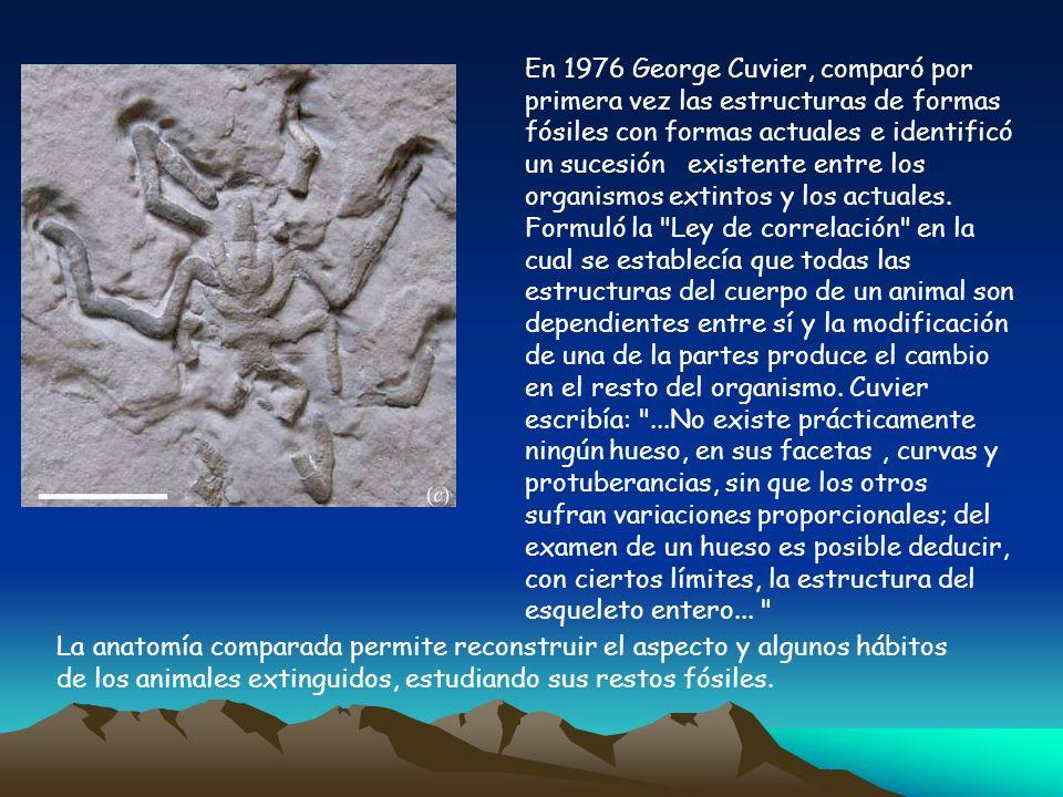 En 1976 George Cuvier, comparó por primera vez las estructuras de formas fósiles con formas actuales e identificó un sucesión existente entre los organismos extintos y los actuales. Formuló la Ley de correlación en la cual se establecía que todas las estructuras del cuerpo de un animal son dependientes entre sí y la modificación de una de la partes produce el cambio en el resto del organismo. Cuvier escribía: ...No existe prácticamente ningún hueso, en sus facetas , curvas y protuberancias, sin que los otros sufran variaciones proporcionales; del examen de un hueso es posible deducir, con ciertos límites, la estructura del esqueleto entero...