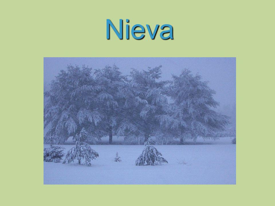 Nieva