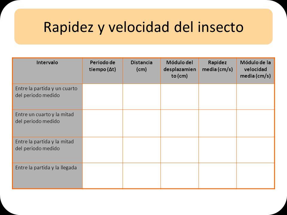 Rapidez y velocidad del insecto