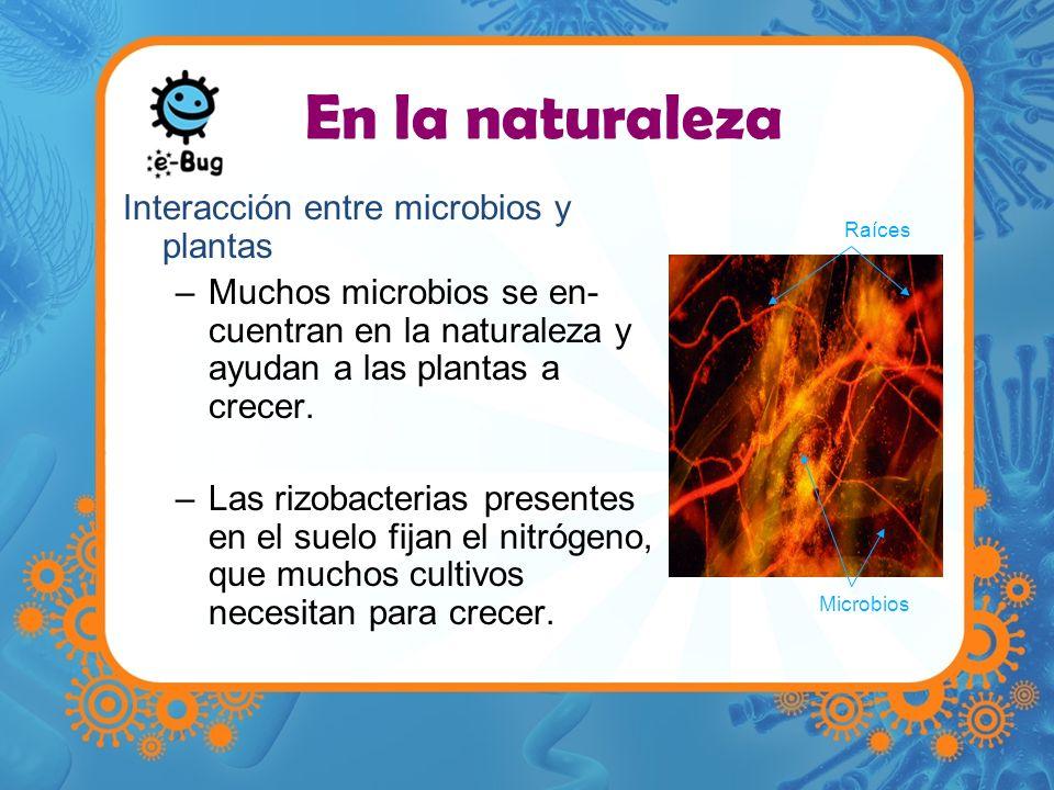 En la naturaleza Interacción entre microbios y plantas
