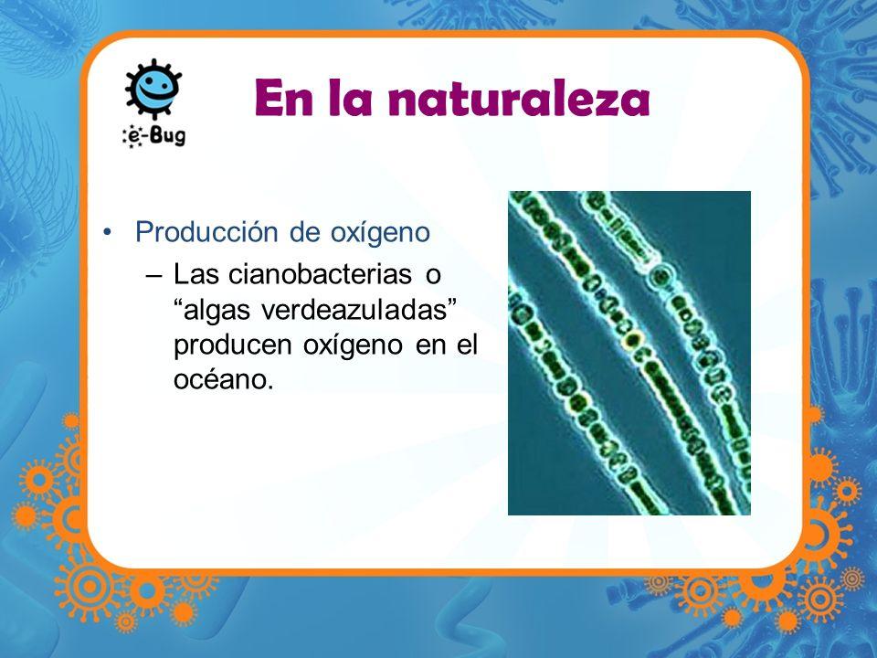En la naturaleza Producción de oxígeno
