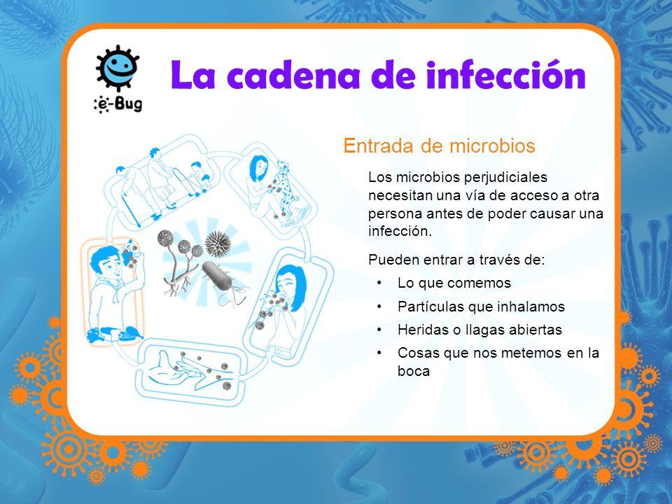La cadena de infección Entrada de microbios