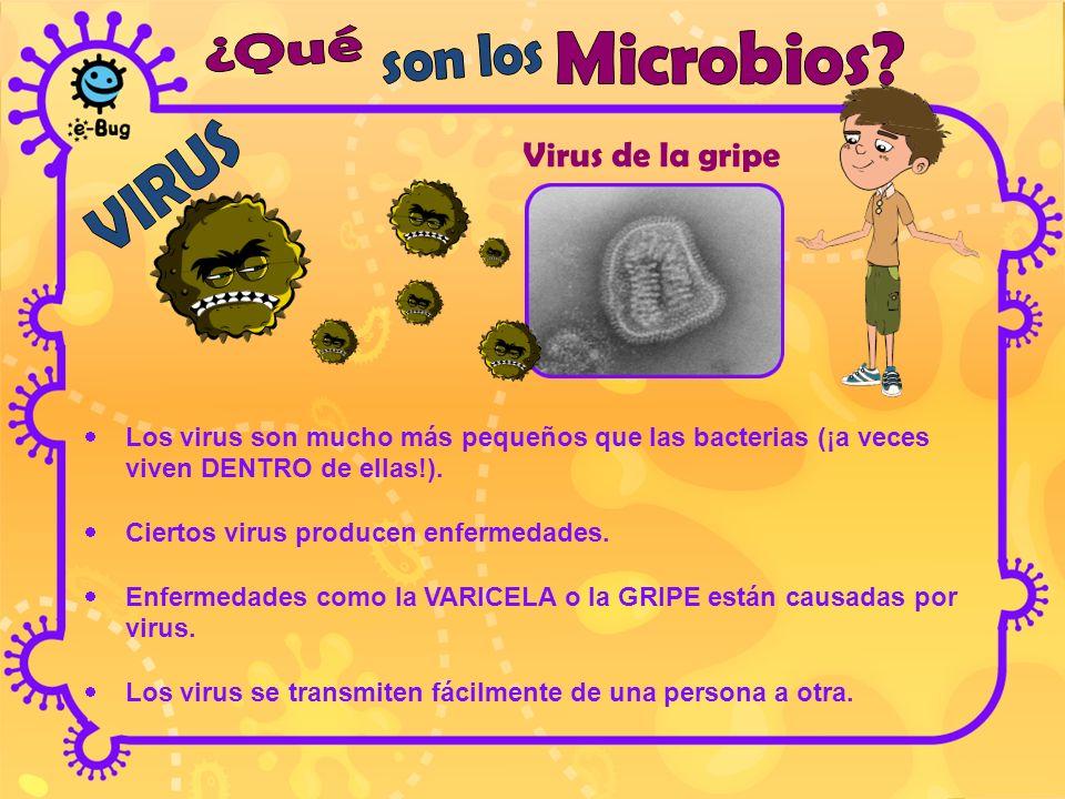 Virus de la gripe ¿Qué Microbios son los VIRUS