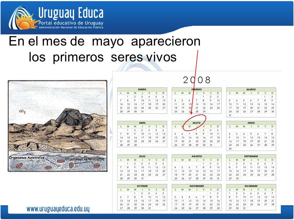 En el mes de mayo aparecieron los primeros seres vivos