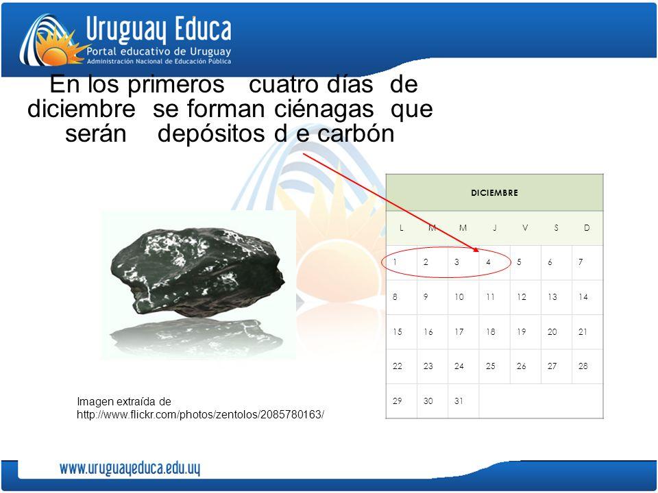 En los primeros cuatro días de diciembre se forman ciénagas que serán depósitos d e carbón