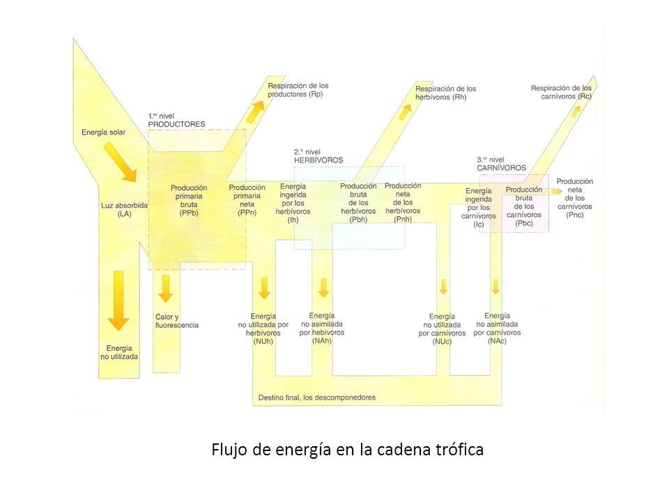 Flujo de energía en la cadena trófica