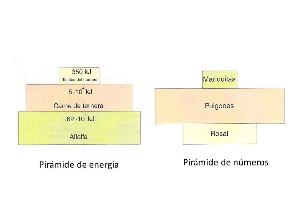 Pirámide de números Pirámide de energía