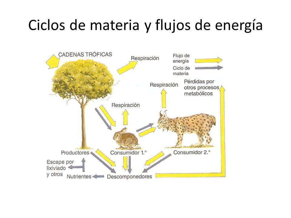 Ciclos de materia y flujos de energía