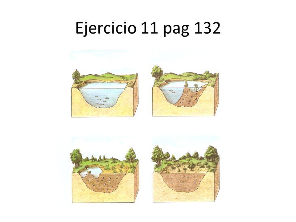 Ejercicio 11 pag 132