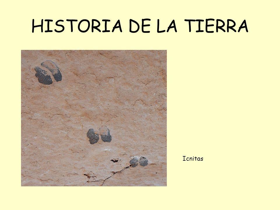HISTORIA DE LA TIERRA Icnitas