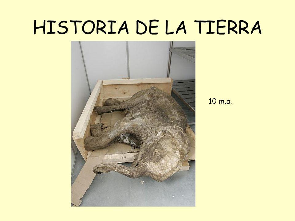 HISTORIA DE LA TIERRA 10 m.a.