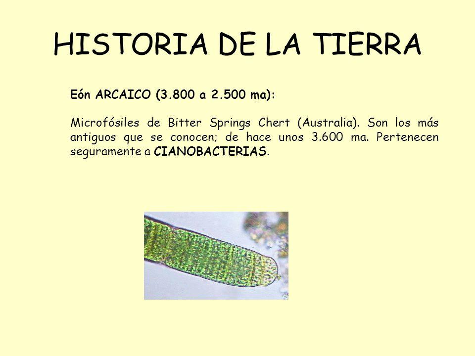 HISTORIA DE LA TIERRA Eón ARCAICO (3.800 a 2.500 ma):