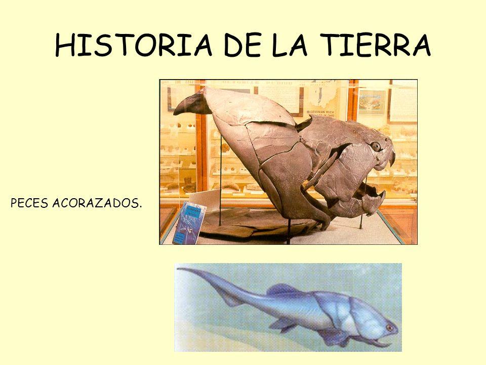 HISTORIA DE LA TIERRA PECES ACORAZADOS.