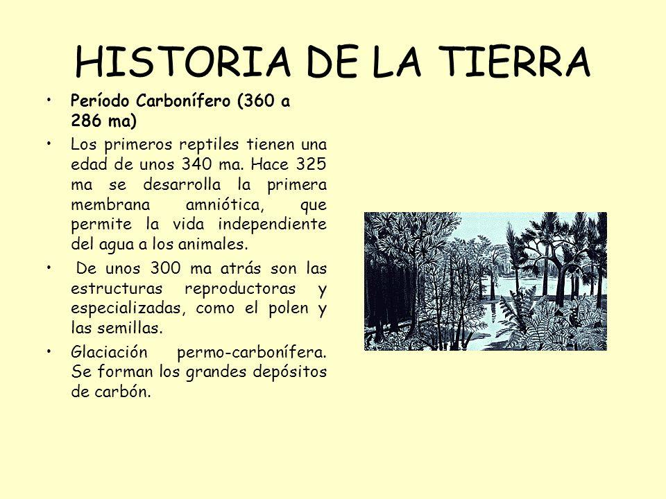 HISTORIA DE LA TIERRA Período Carbonífero (360 a 286 ma)