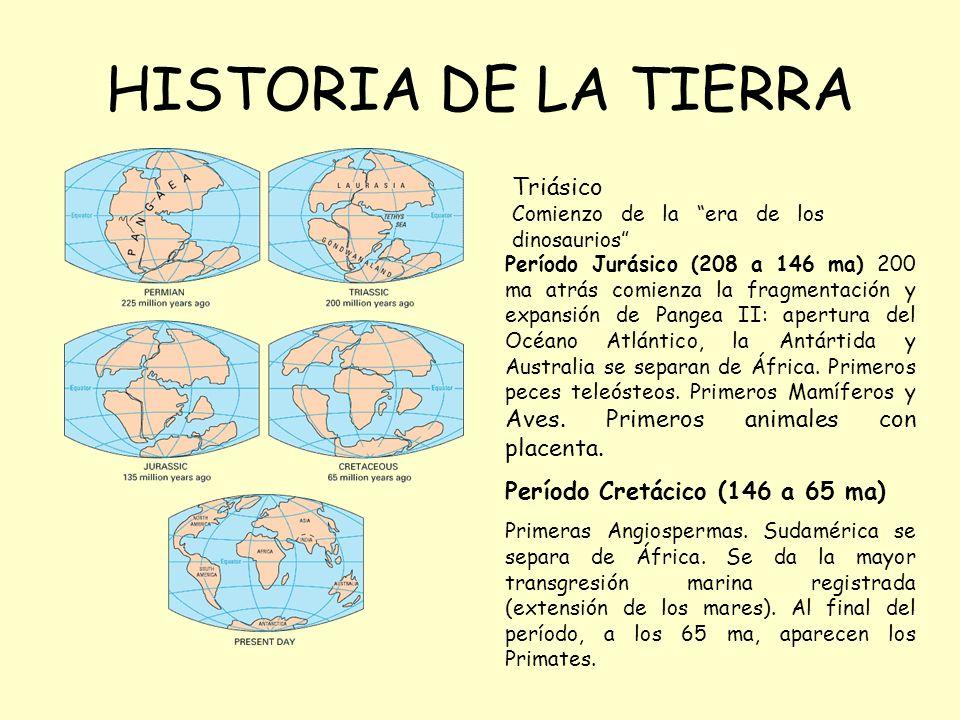 HISTORIA DE LA TIERRA Triásico Período Cretácico (146 a 65 ma)