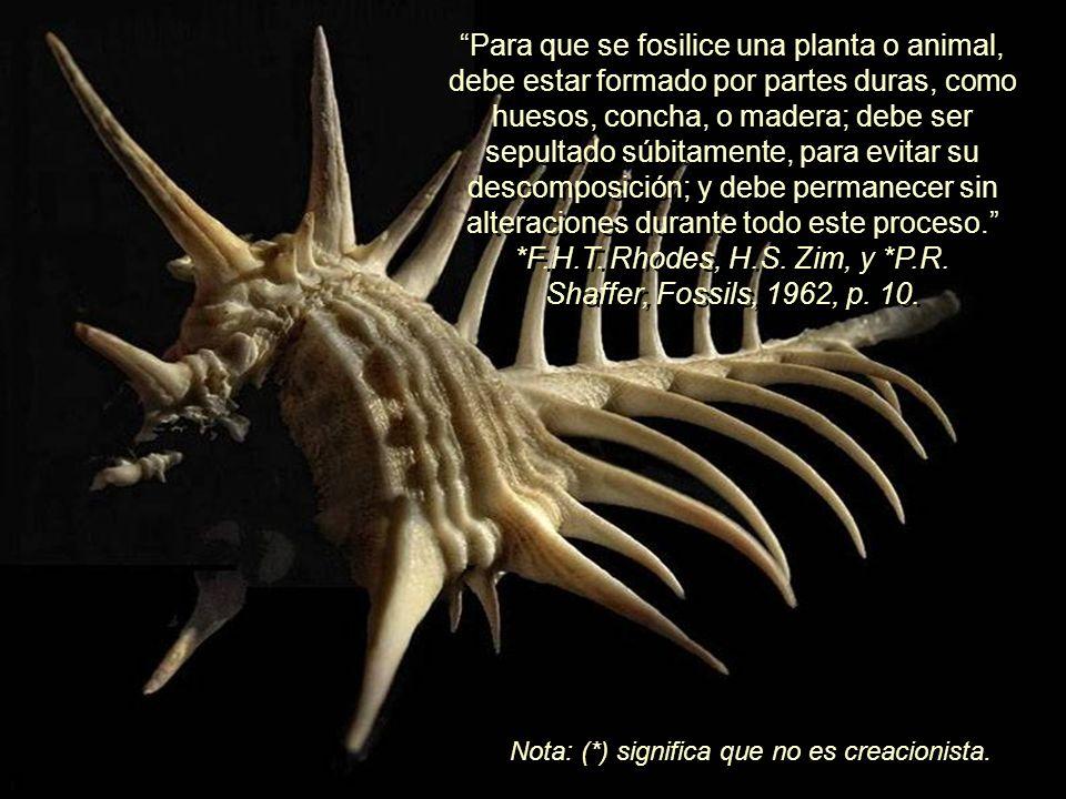 Para que se fosilice una planta o animal, debe estar formado por partes duras, como huesos, concha, o madera; debe ser sepultado súbitamente, para evitar su descomposición; y debe permanecer sin alteraciones durante todo este proceso. *F.H.T. Rhodes, H.S. Zim, y *P.R. Shaffer, Fossils, 1962, p. 10.