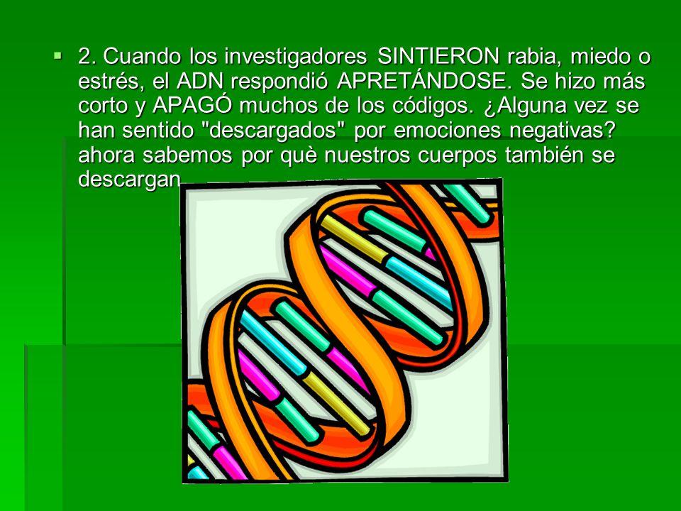 2. Cuando los investigadores SINTIERON rabia, miedo o estrés, el ADN respondió APRETÁNDOSE.