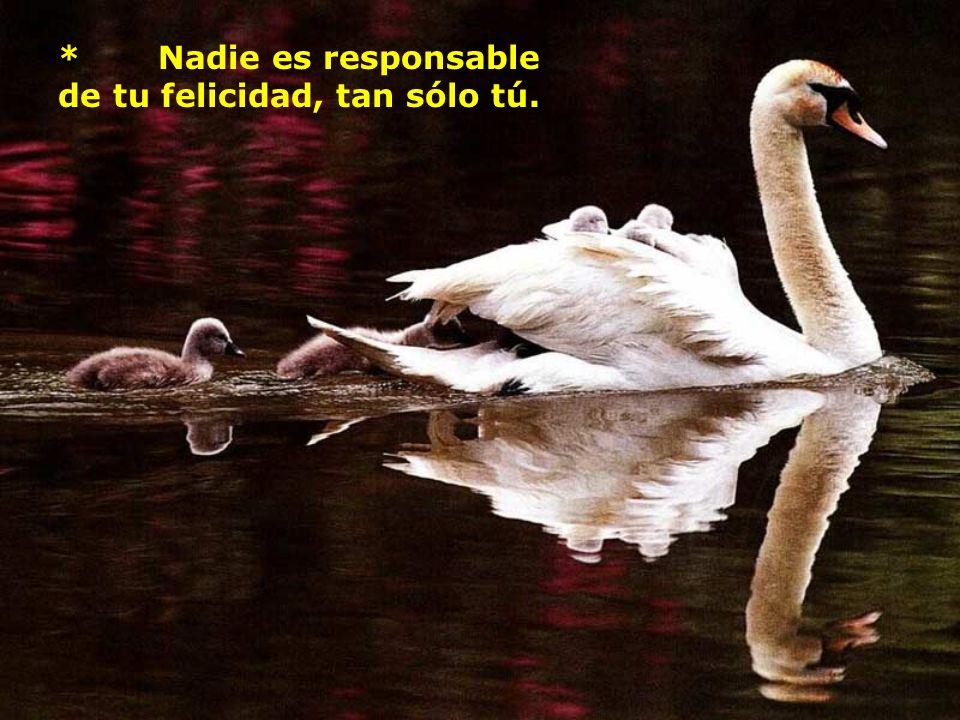 * Nadie es responsable de tu felicidad, tan sólo tú.