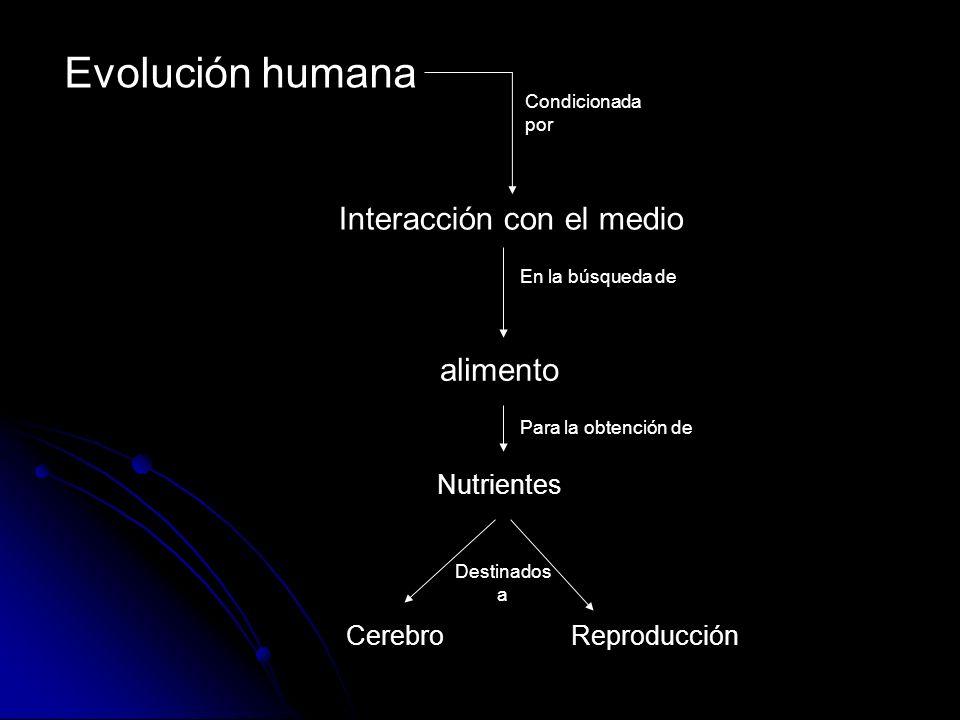 Evolución humana Interacción con el medio alimento Nutrientes Cerebro