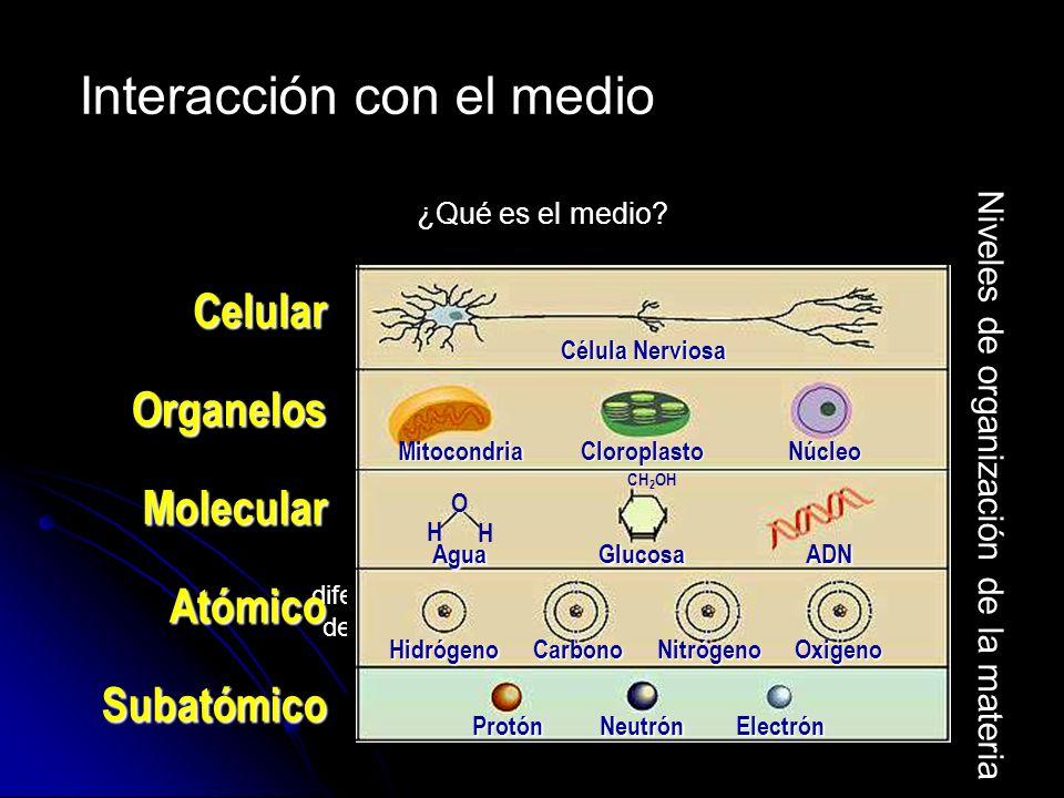 Presenta diferentes niveles de organización