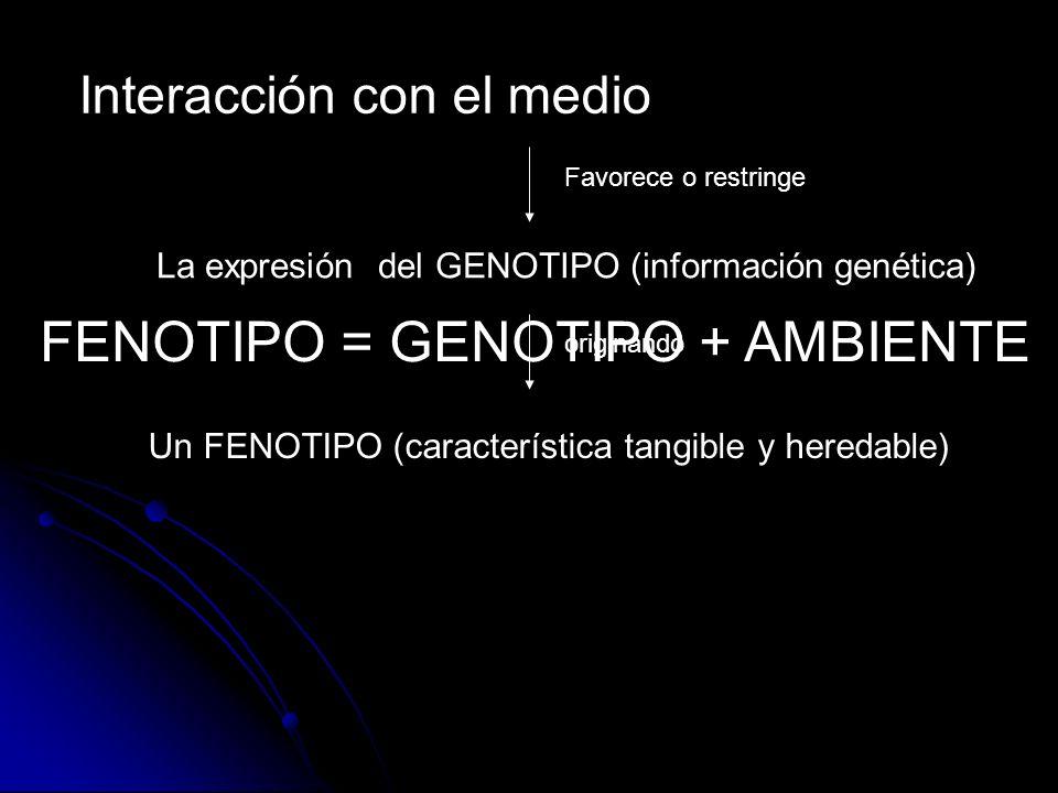 FENOTIPO = GENOTIPO + AMBIENTE