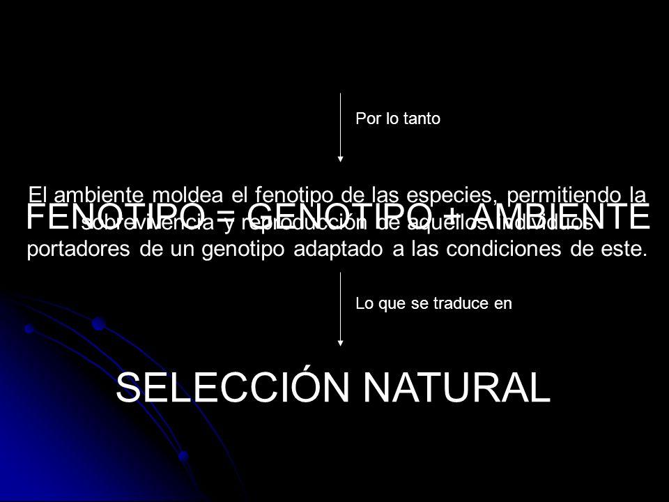 SELECCIÓN NATURAL FENOTIPO = GENOTIPO + AMBIENTE